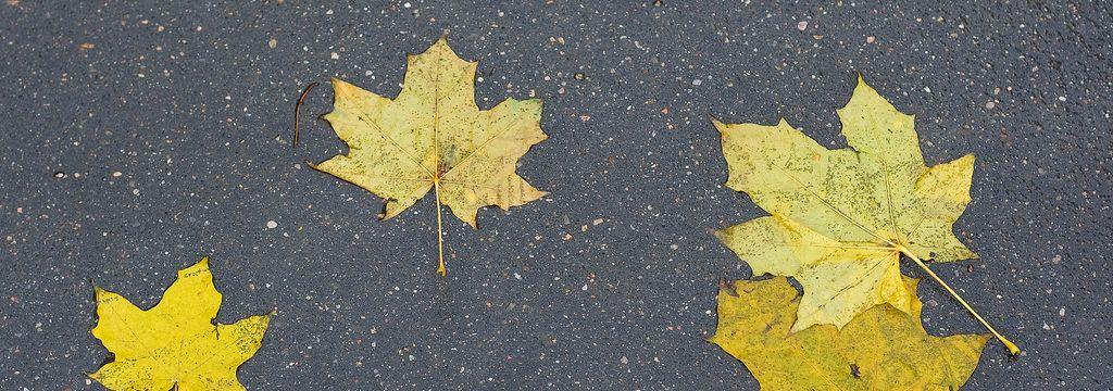 Cómo poner tu coche a punto para el otoño