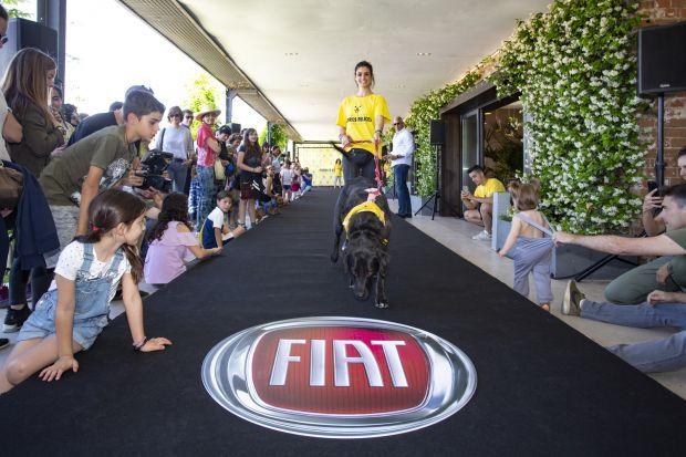 """Rotundo éxito del concurso solidario """"Otra belleza canina"""" de Fiat Professional"""