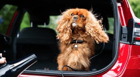 Ford Puma: salón de belleza portátil para tu mascota