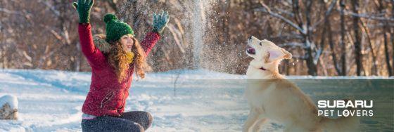 ¡El invierno es para todos! Escápate a la nieve con tu perro y tu Subaru
