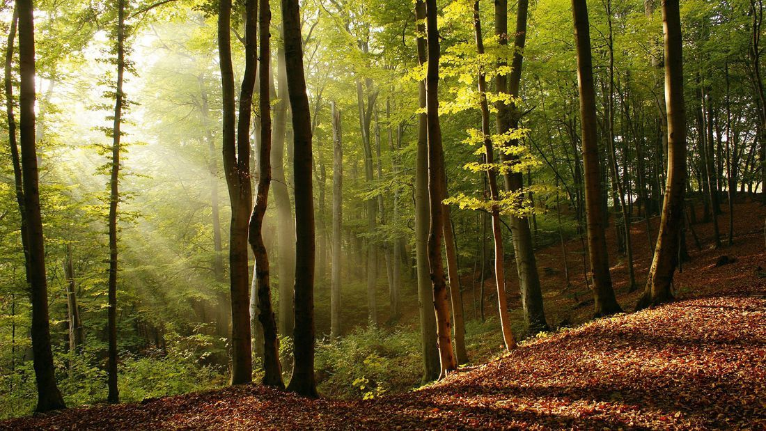 Politica de Calidad y Medio Ambiente