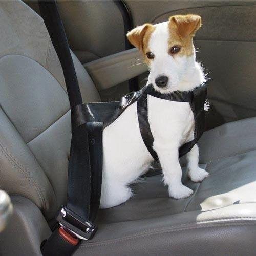 Consejos para viajar en coche con tu mascota