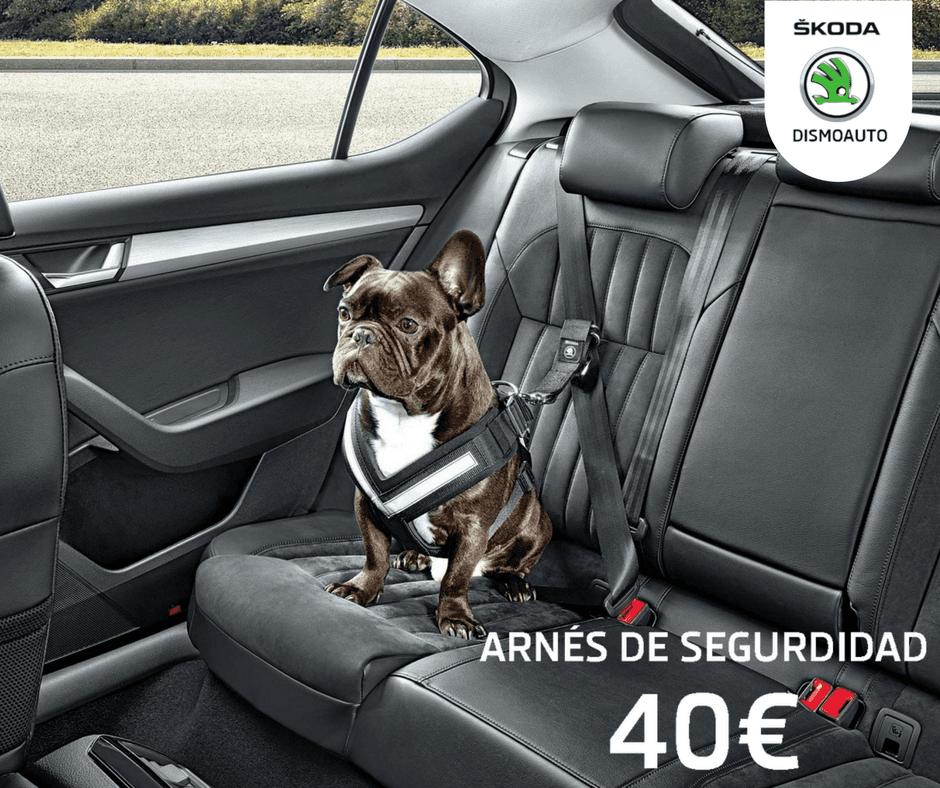 Arnés de seguridad para mascotas | Accesorios Originales Skoda |