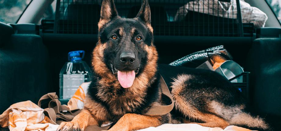 Cómo disfrutar del viaje en coche con tu mascota estas vacaciones