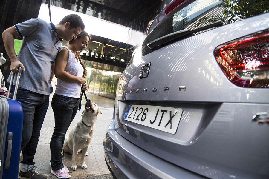 Consejos SEAT para viajar con Mascotas