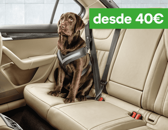 CINTURÓN PARA TU MASCOTA DESDE 40€